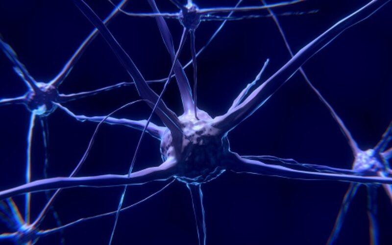 Alzheimer, all'origine l'accumulo eccessivo di ferro nella neocorteccia